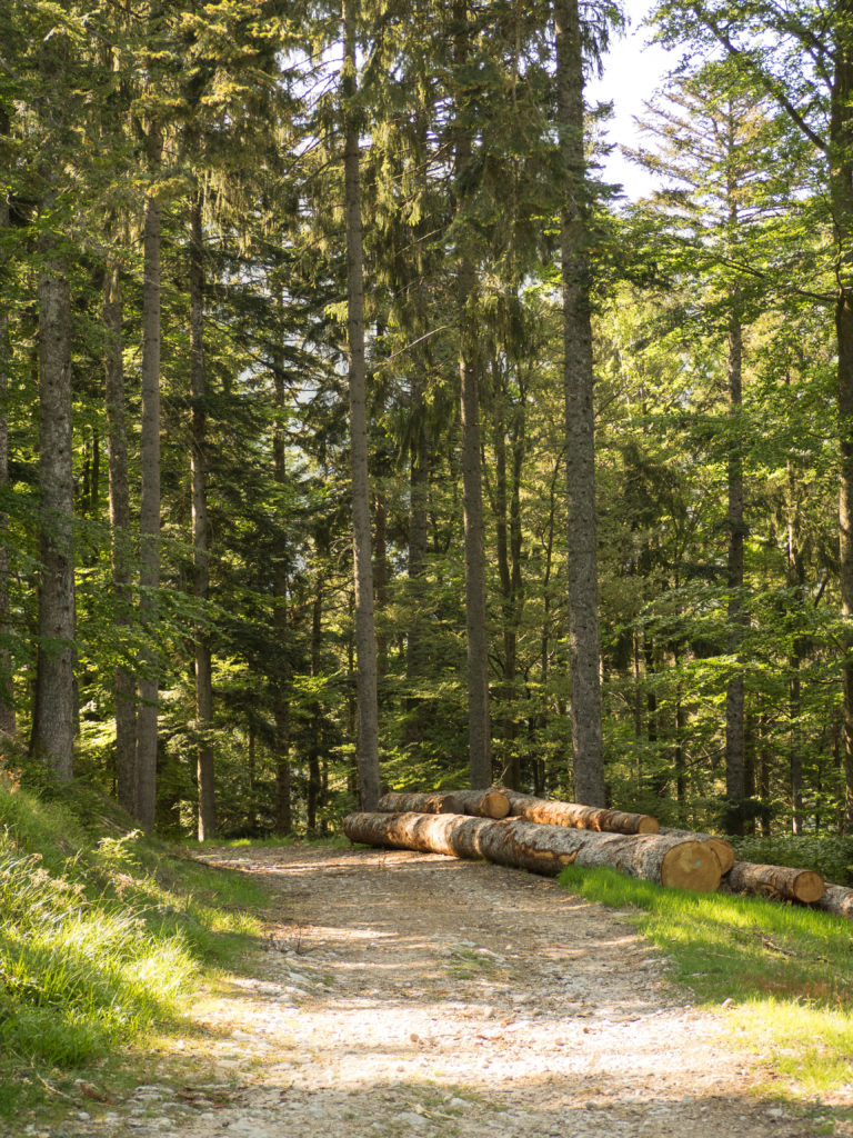Randonnée Frankenthal Vosges Dis Moi Lina
